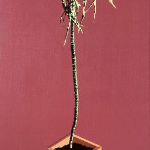 Plant (Pink)